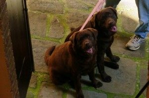 Bacco and Hector... LOVE!