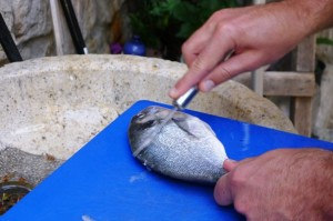 Tony's first time gutting a fish