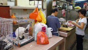 Cat Cages In Kuala Lumpur Chinatown