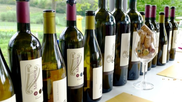 Wine Tasting in Umbria Italy
