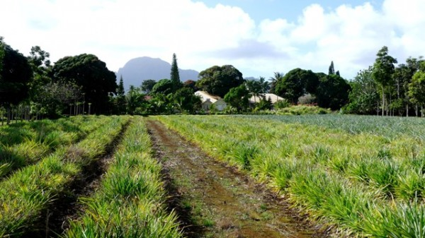 Kilohana Plantation 600x337 A Farm To Fork Culinary Tour In Paradise